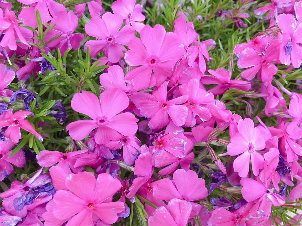 f:id:rainbowflowers:20200417172037j:image