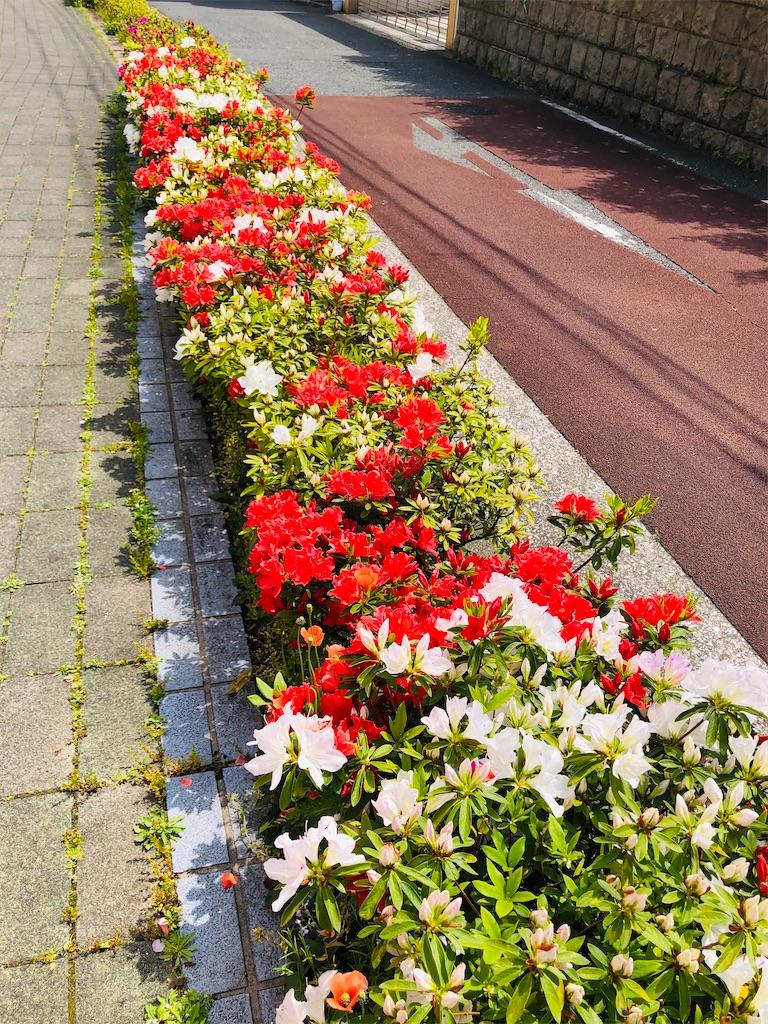 f:id:rainbowflowers:20200417172105j:image