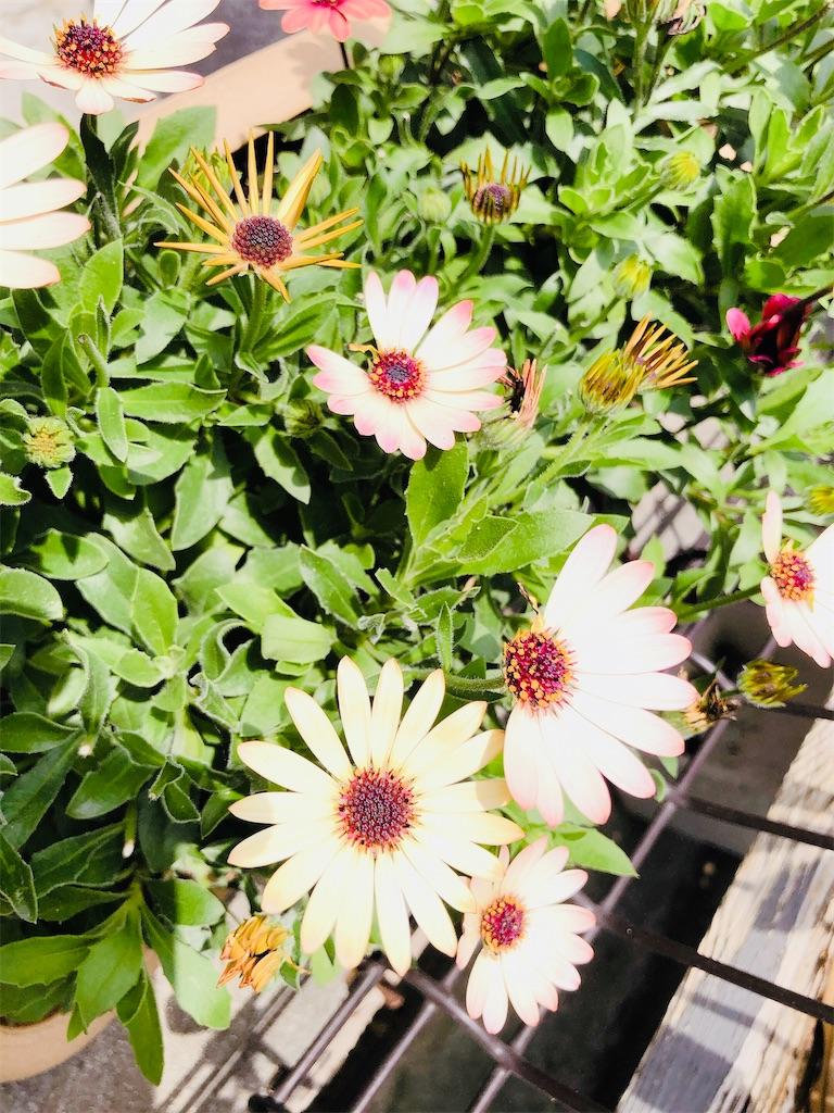 f:id:rainbowflowers:20200417172114j:image