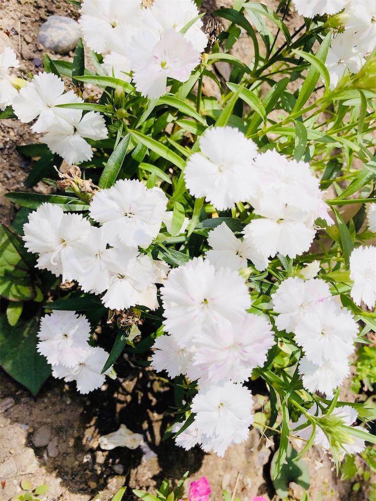 f:id:rainbowflowers:20200417172151j:image