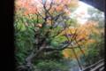 [観光]永観堂の紅葉