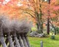 [観光]京都の紅葉