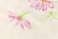 [花の絵]コスモス