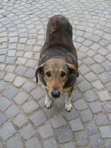 街角にいるいぬ:dogs, Sofia, BULGARIA 2006/09/24