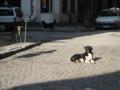 [ブルガリア][ソフィア][犬]街角にいるいぬ:dogs, Sofia, BULGARIA 2006/09/24