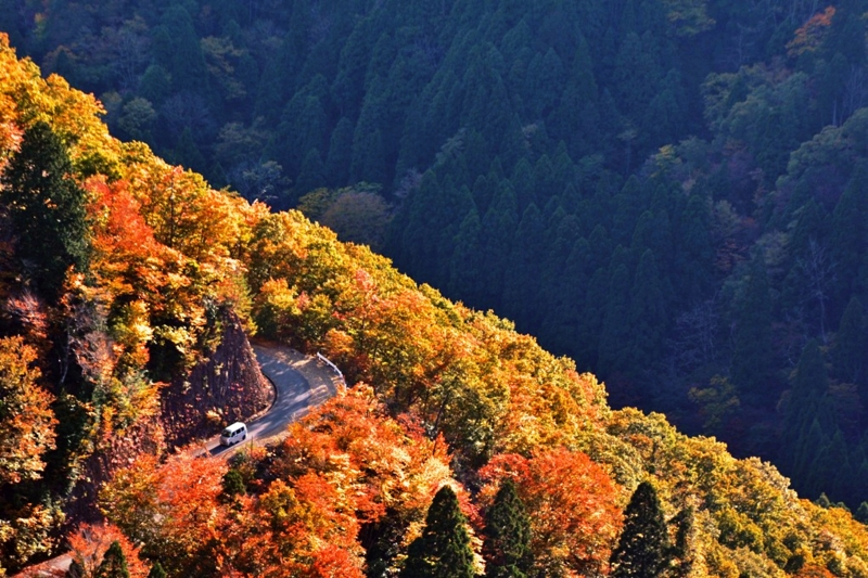 「京都新聞写真コンテスト」峠の秋