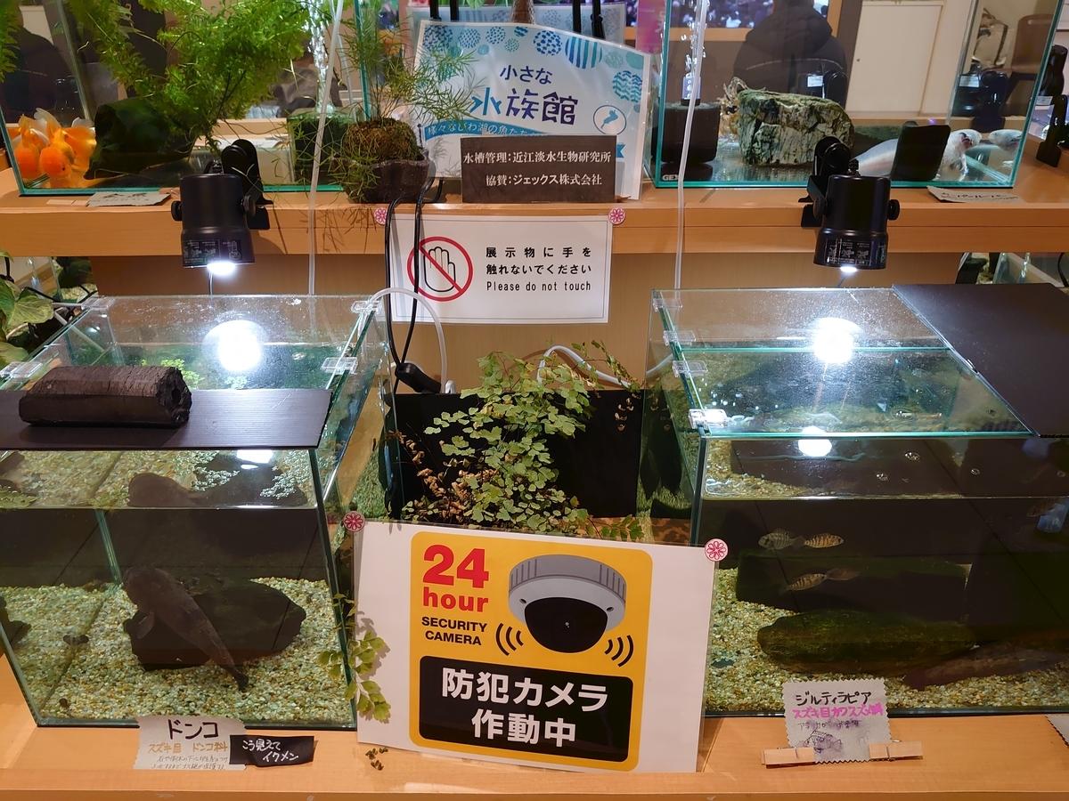 f:id:raku-aqua:20200126180159j:plain