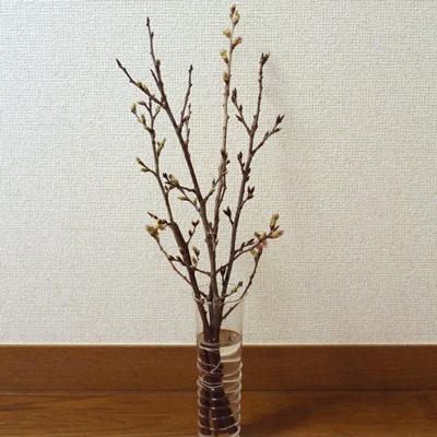 f:id:raku-kurashi:20200217163419j:plain