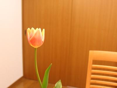f:id:raku-kurashi:20200308183547j:plain