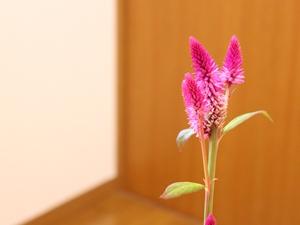 f:id:raku-kurashi:20201204133433j:plain