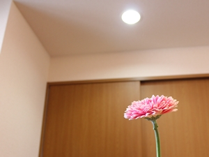 f:id:raku-kurashi:20201229163358j:plain