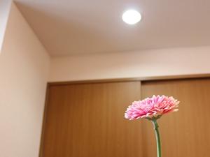f:id:raku-kurashi:20210310180556j:plain