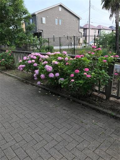 f:id:rakuda95:20170722151547j:image