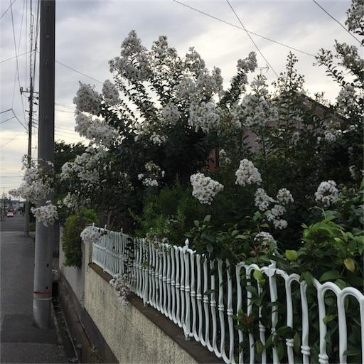 f:id:rakuda95:20170726100727j:image