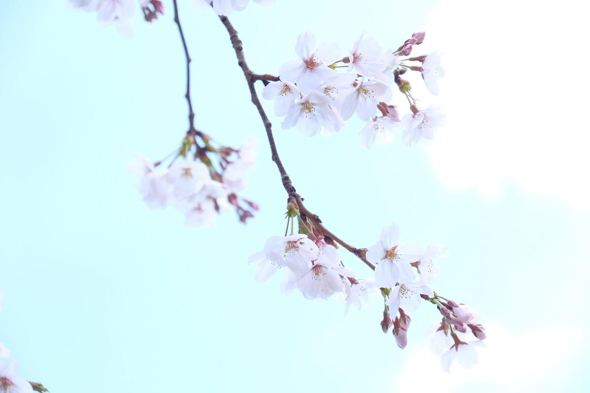f:id:rakugou:20190403231025j:plain