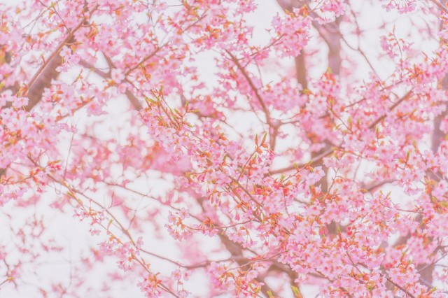 f:id:rakuneko-naga:20191210120329j:image