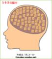 うそ子の脳内