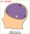 暗・内認の脳内