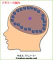 クモミーの脳内