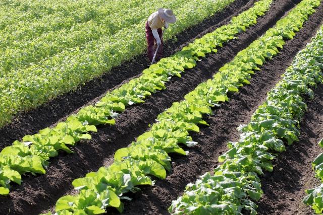 未経験から農業へ転職