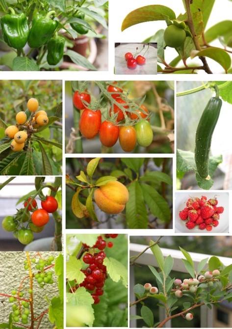 我が家の野菜と果物達