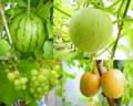 マンション4Fの果物達