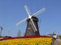 [風景]鶴見緑地の風車