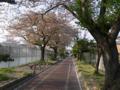 [風景]桜@琵琶湖疏水(墨染発電所付近)