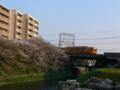[風景]桜@琵琶湖疏水(近鉄伏見駅付近)
