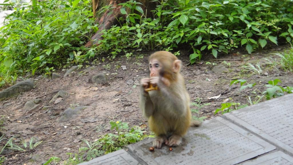 張家界 黄石寨風景区 小猿