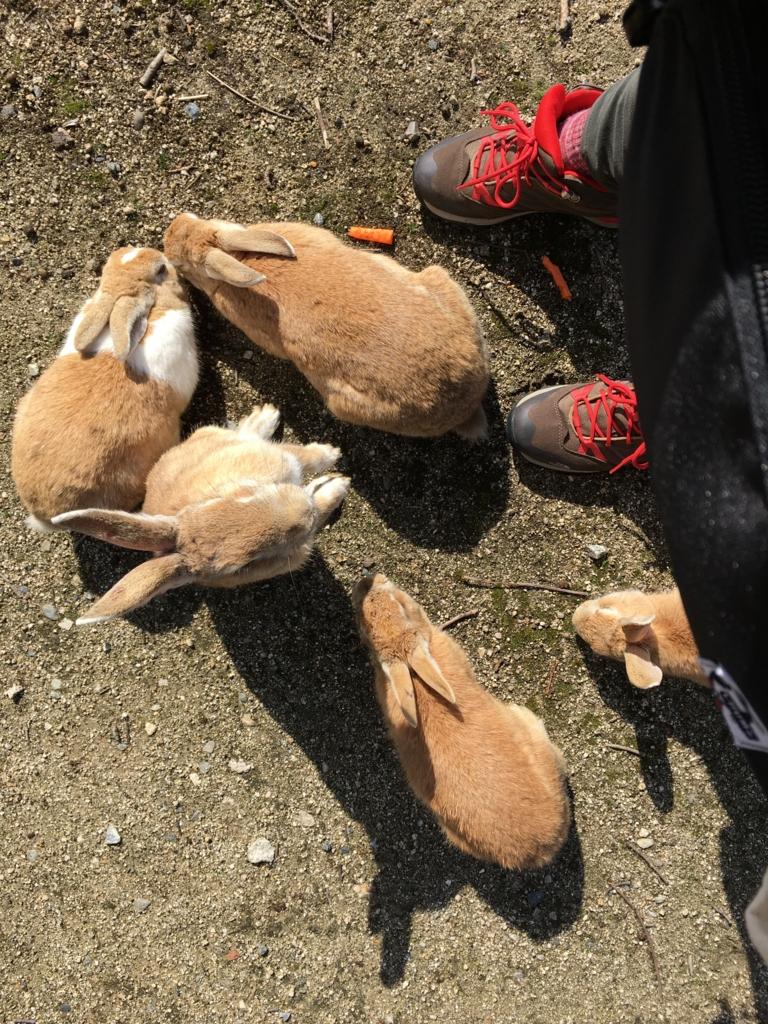大久野島 ねだるウサギ