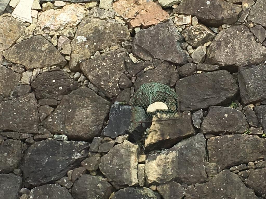 姫路城 城壁 漬物石