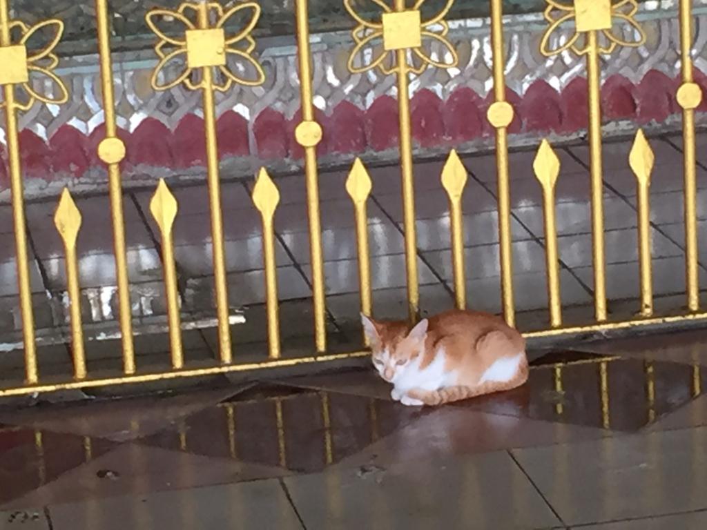 ミャンマー チャウタッジー・バゴタ 猫 種類は同じ?