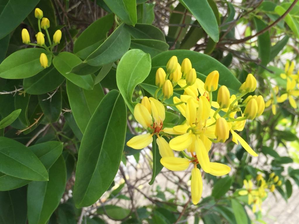ミャンマー バガン ティリビセヤ・サンクチュアリー・リゾート ホテル たくさんのお花