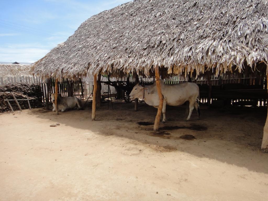 ミャンマー バガン 地元の村 牛舎