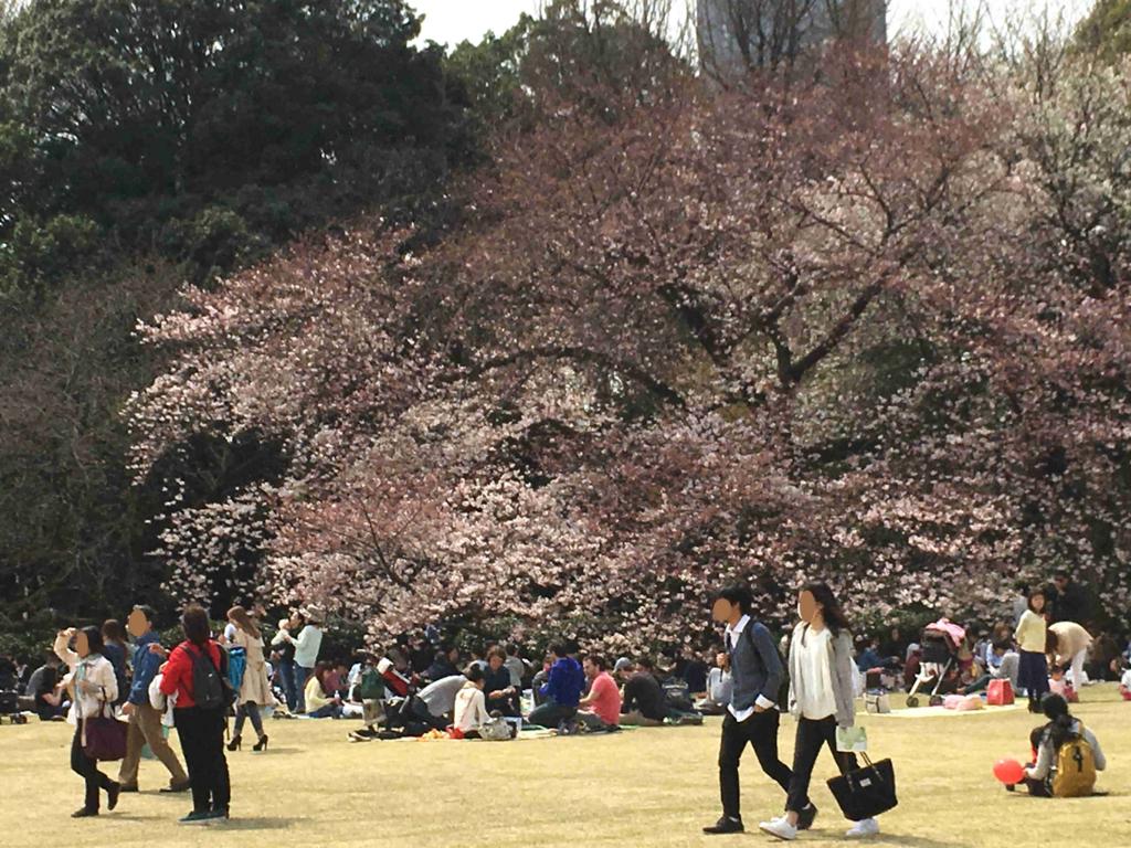 新宿御苑 まだツボミの桜