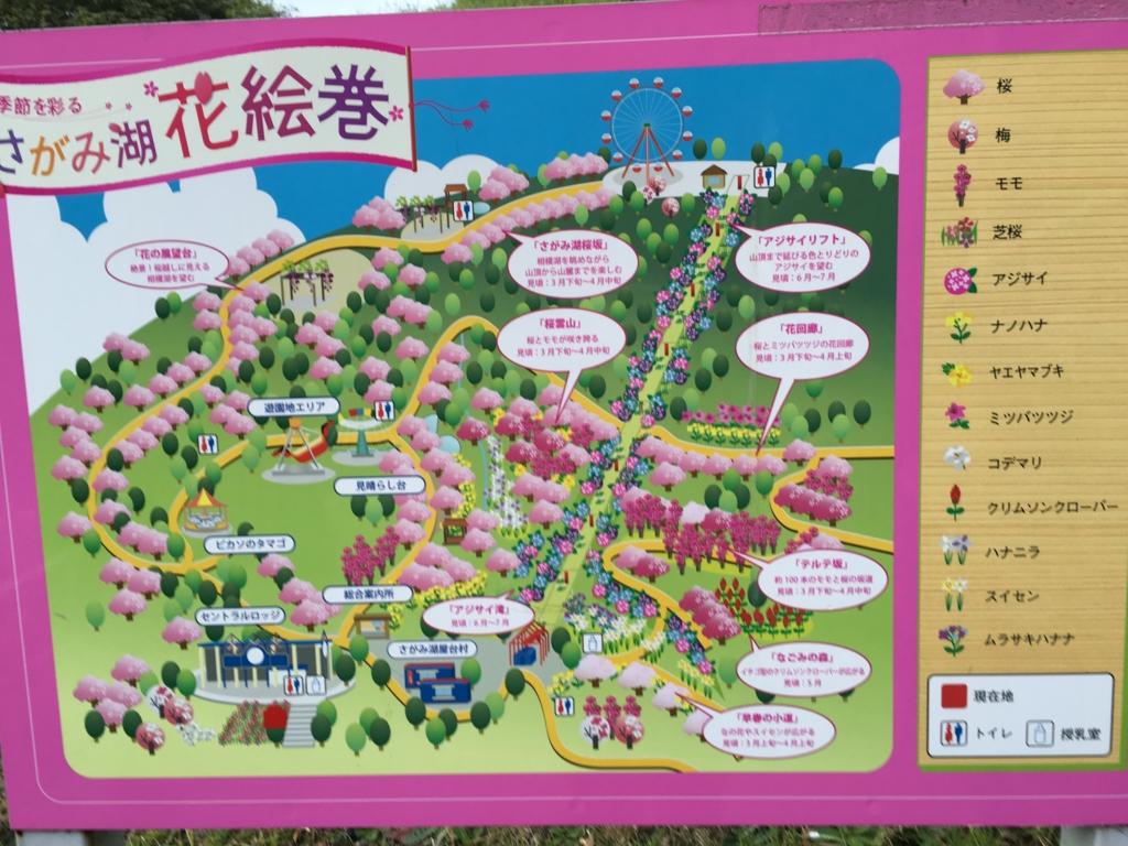 「さがみ湖リゾート プレジャーフォレスト」園内桜マップ