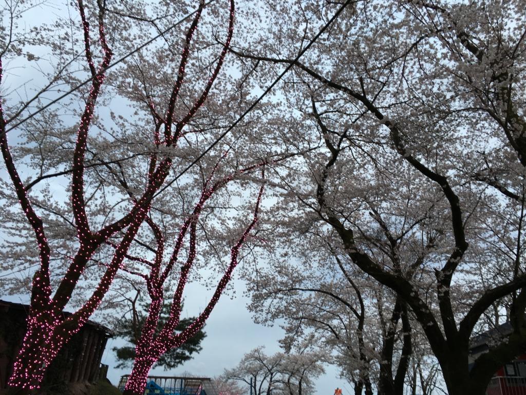 「さがみ湖リゾート プレジャーフォレスト」桜
