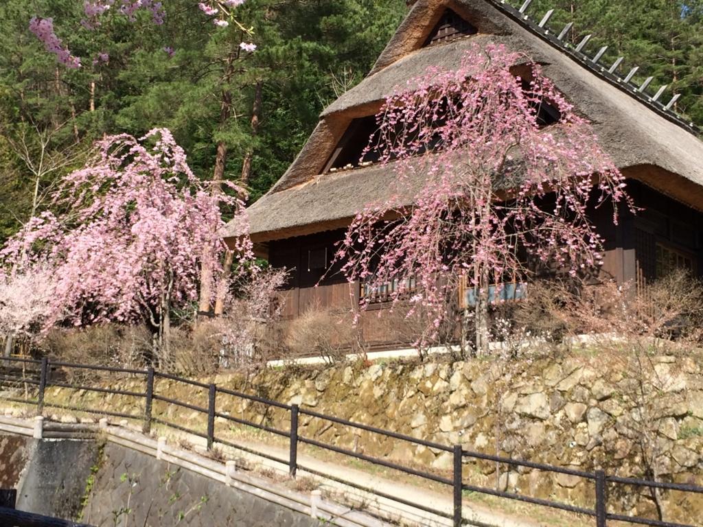 「西湖いやしの里根場」茅葺き屋根と枝垂桜