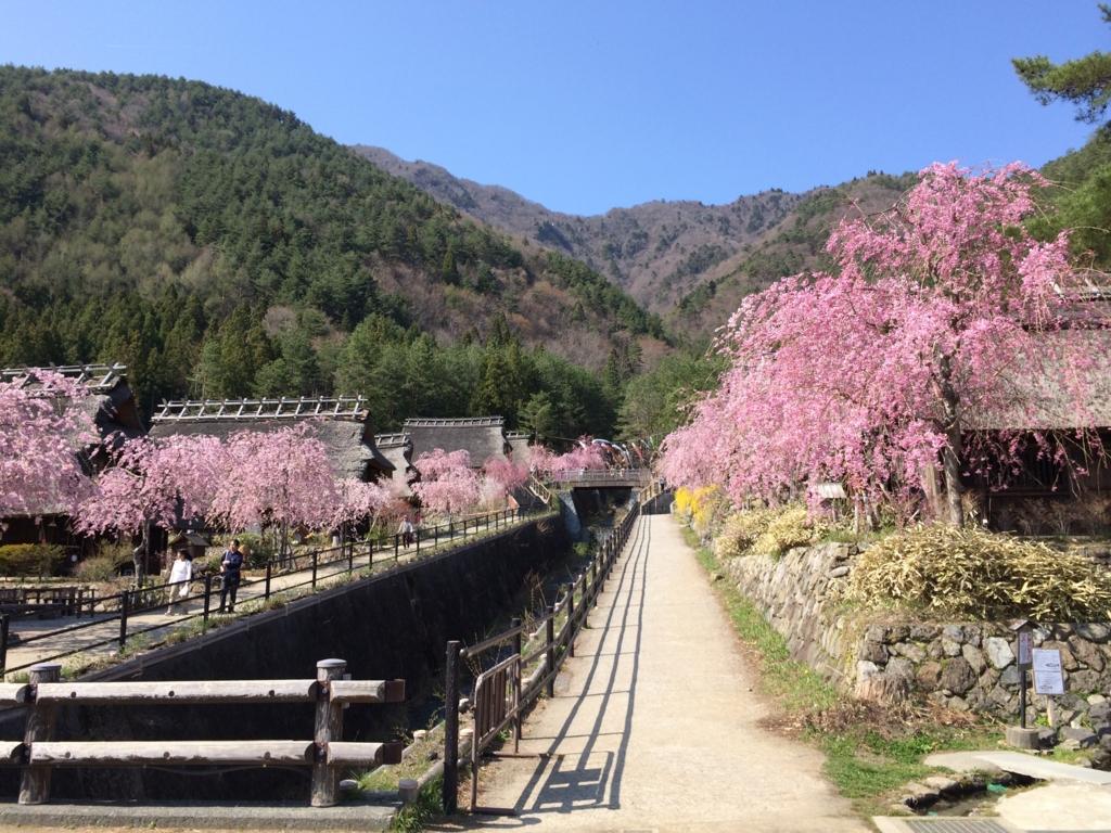 「西湖いやしの里根場」入り口から続く枝垂桜