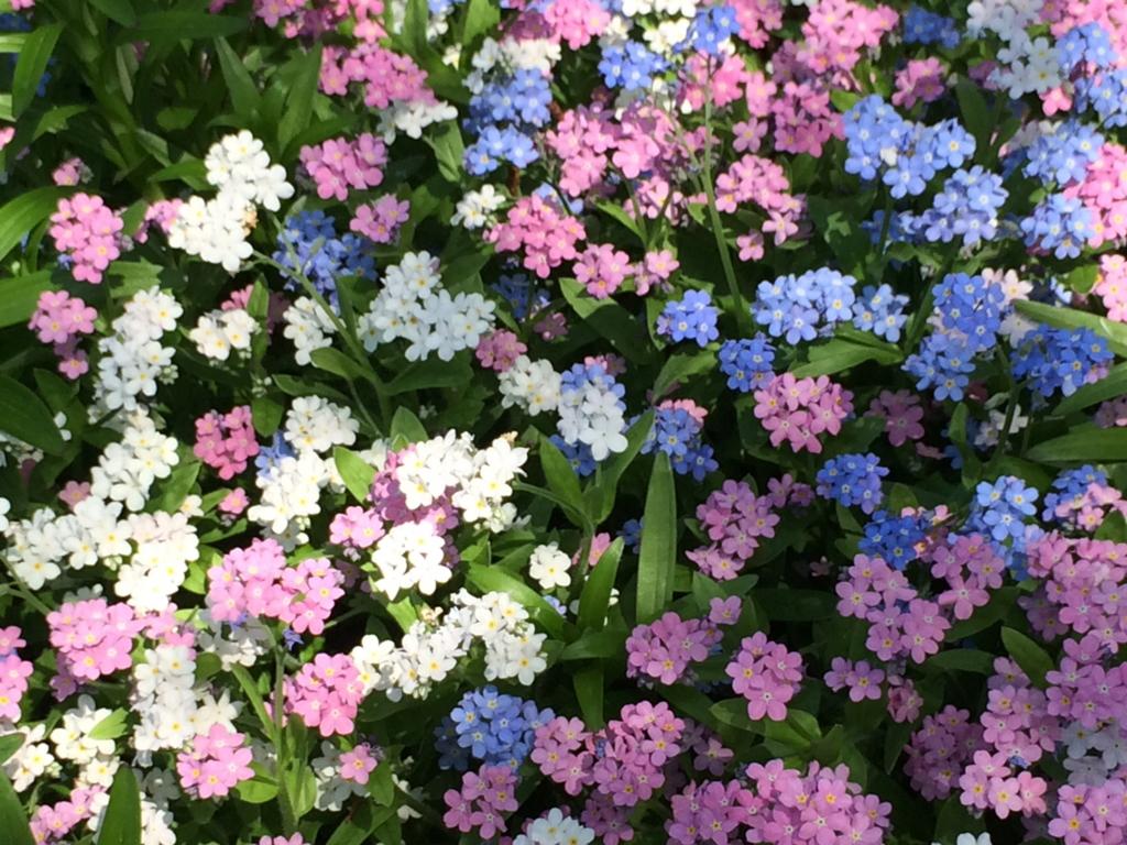 はとバス「ピアニシモⅢ」「キングスウェル」庭のたくさんの花