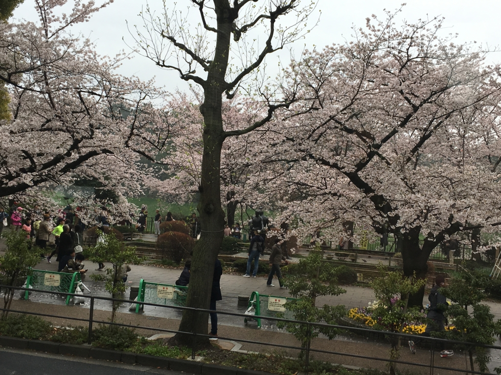 「ロイヤルクルーザー四季の花」ツアー 車窓より 皇居 桜満開