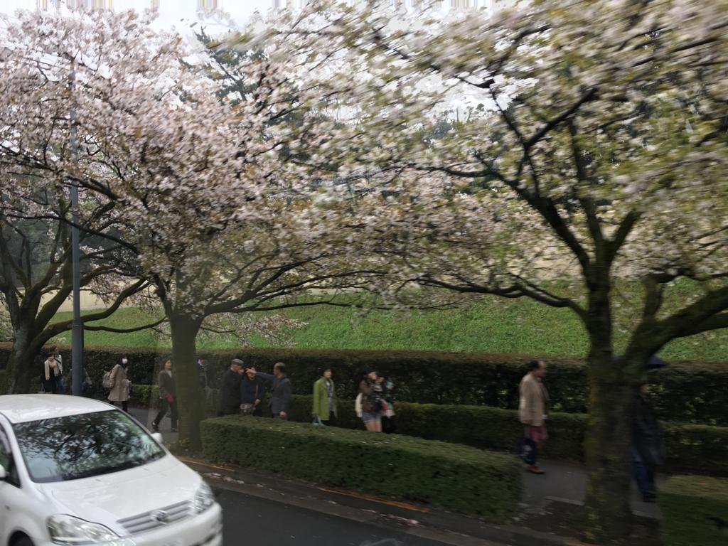 「ロイヤルクルーザー四季の花」ツアー 車窓より オオシマザクラ