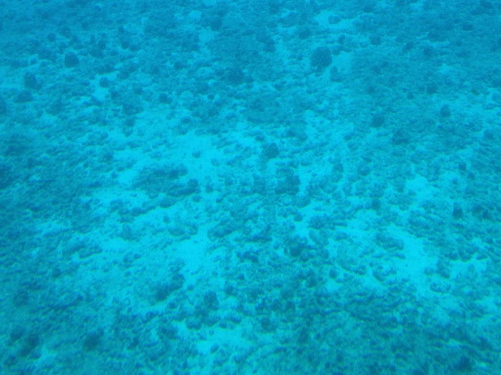 ハワイ オアフ島 観光用潜水艦 「アトランティス」よりの海中 パリ・オ・ポノ