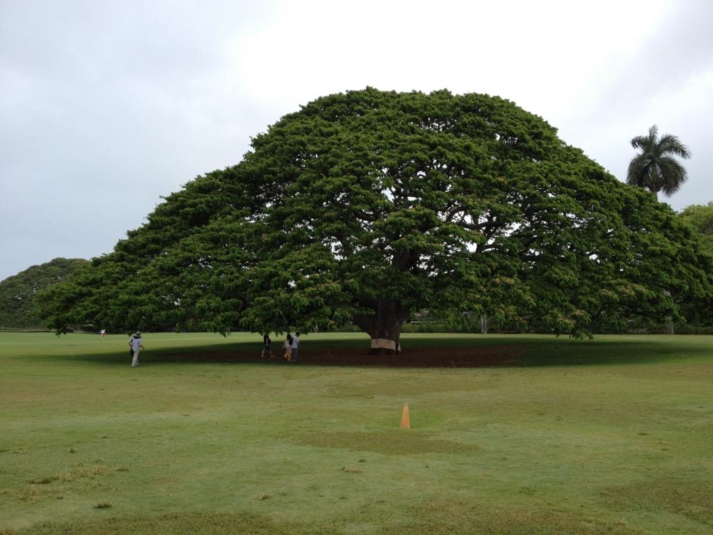ハワイ オアフ島 モアナルアガーデン この木なんの木