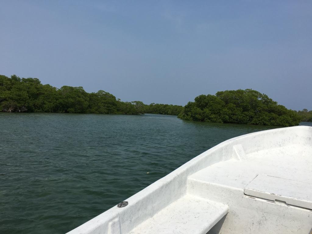 ベリーズシティ ゴフ島へ マングローブの森へ