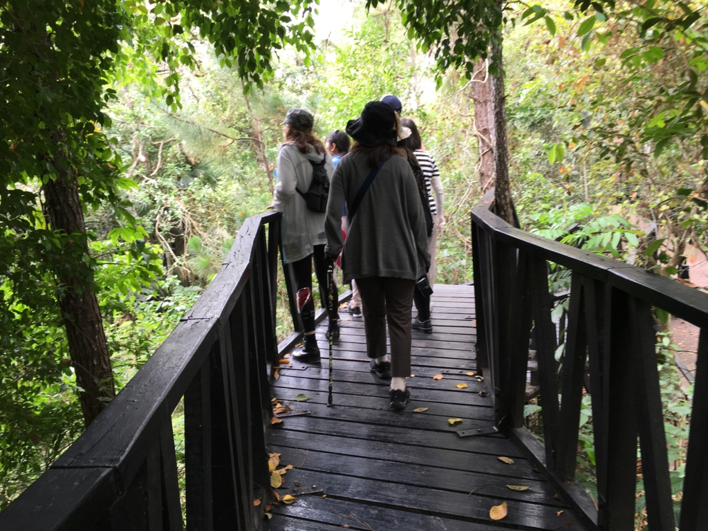 ジャングルの中のベリーズ動物園 スロープ