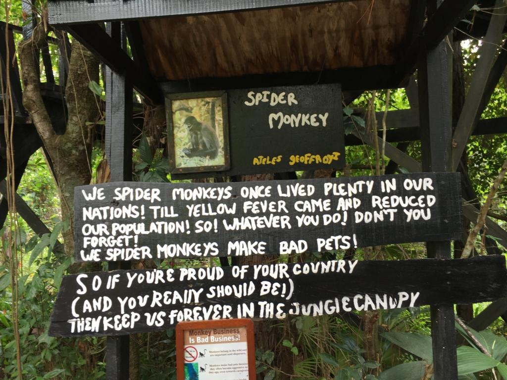 ベリーズ動物園 クモザル説明看板