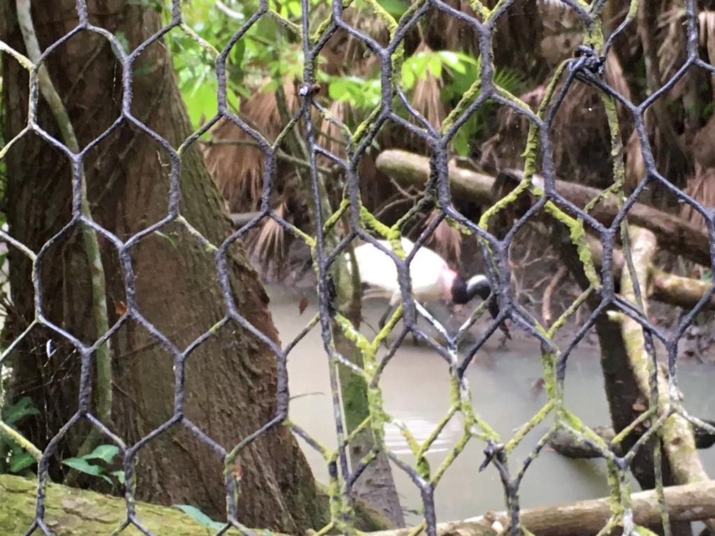 ベリーズ動物園 有名な鳥2