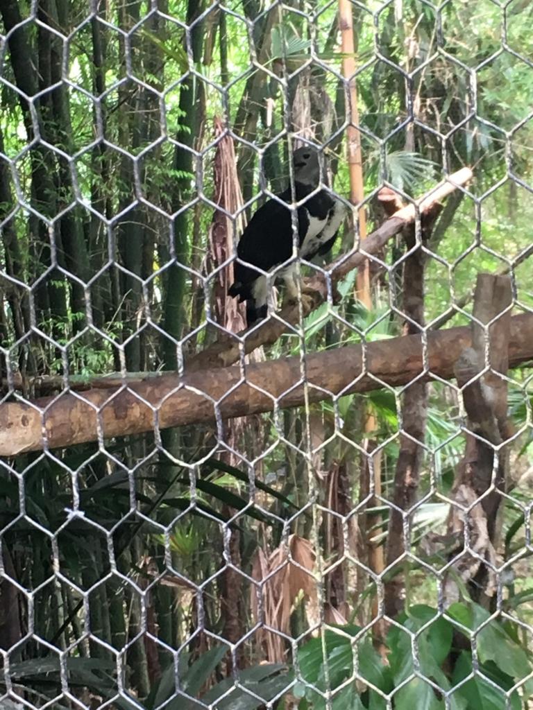 ベリーズ動物園 図鑑で見た鳥